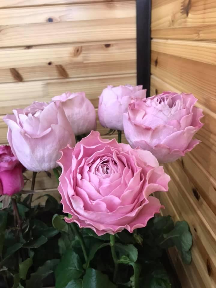 ピンクの大きなバラとラナンキュラス