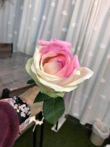 不思議なバラ
