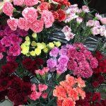 母の日用のお花たち