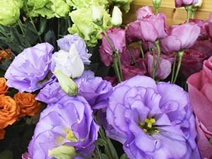 6月の生花|トルコ桔梗